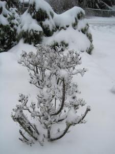 The Ice-Storm